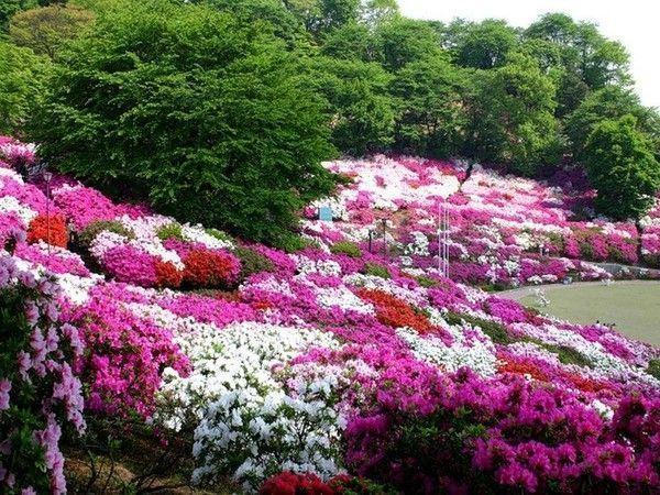 Jardin fleuri japon for Organiser un jardin fleuri