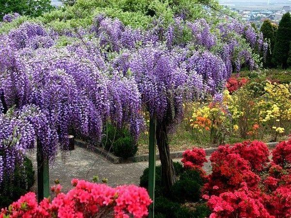 jardin fleuri japon