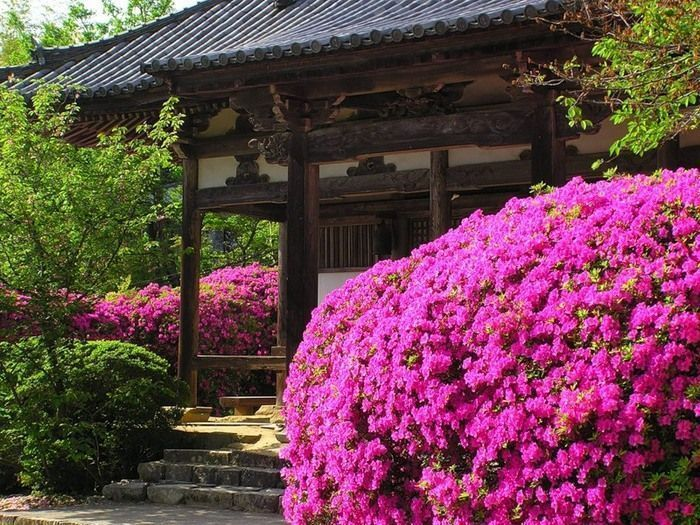 Jardin fleuri japon for Jardin fleuri lyon 9